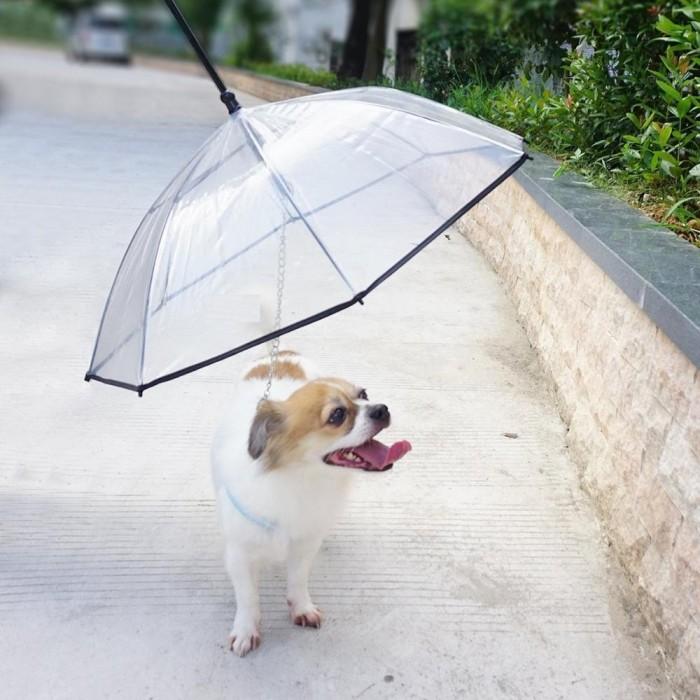 2015-new-design-pet-dog-umbrella-and.jpg