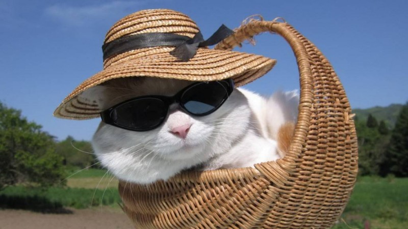 20-pictures-of-animals-in-hats-to-brighten-up-your-day-3.jpg
