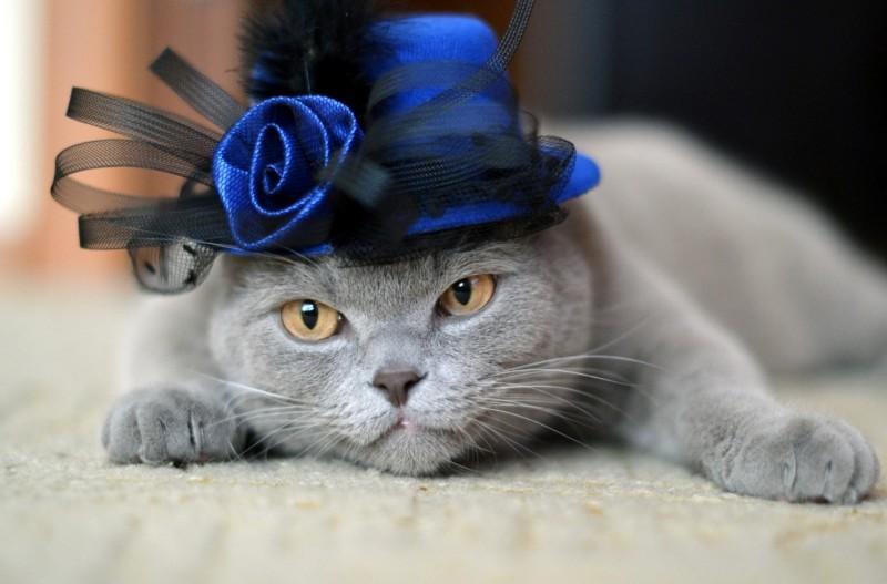 Cats_Glance_Hat_Grey_436921.jpg