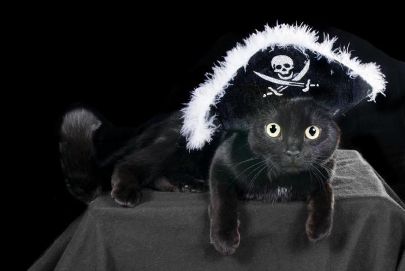 cat-costume.jpg