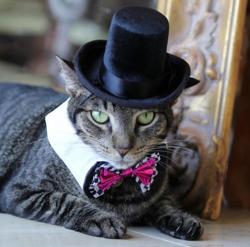 cat-top-hat.jpg