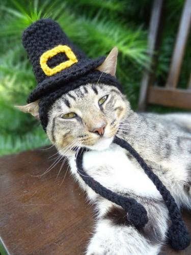 pilgram-cat-hat.jpg