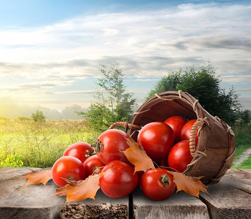 Tomatoes_Wicker_basket_483760.jpg