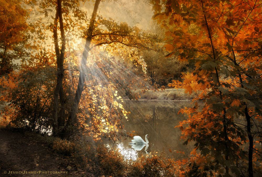 Jessica-Jenney--Autumn-Afterglow.jpg