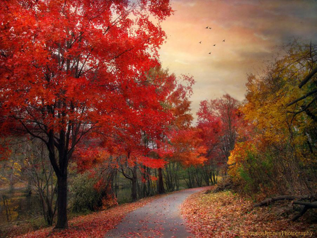 Jessica-Jenney--Autumn-Maples.jpg